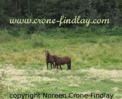 horses-1-qs